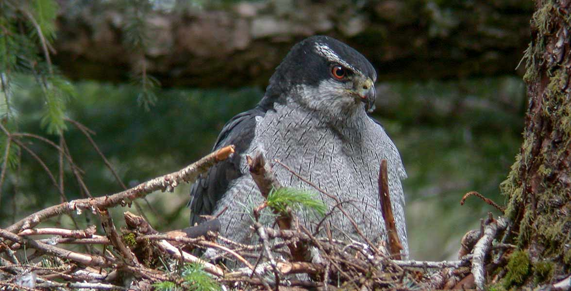 Save birds from clear-cutting | One-day donation match