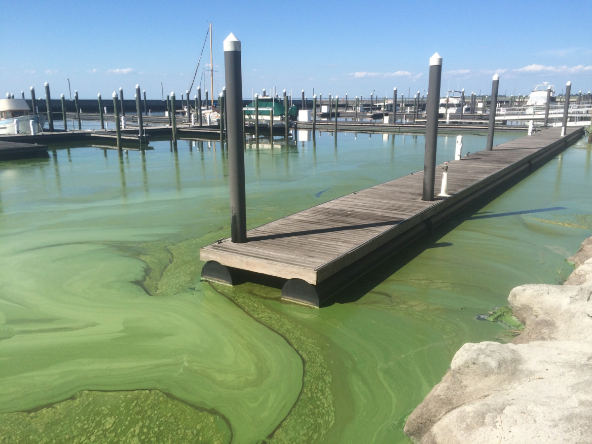 Abandoned Marina due to Algae