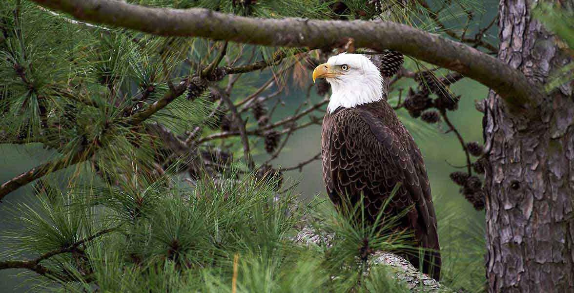 Defend the Endangered Species Act
